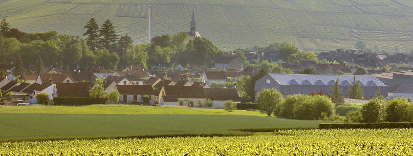 Vignoble chablis grand cru