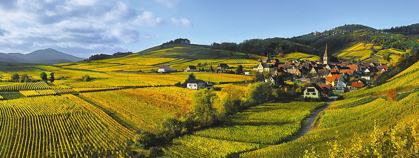 Alsace wine route, Alsace wine route