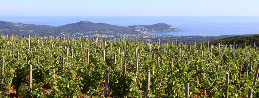 Vignoble de Provence, vignoble bandol