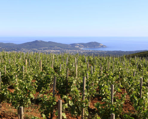 Vignoble de Provence