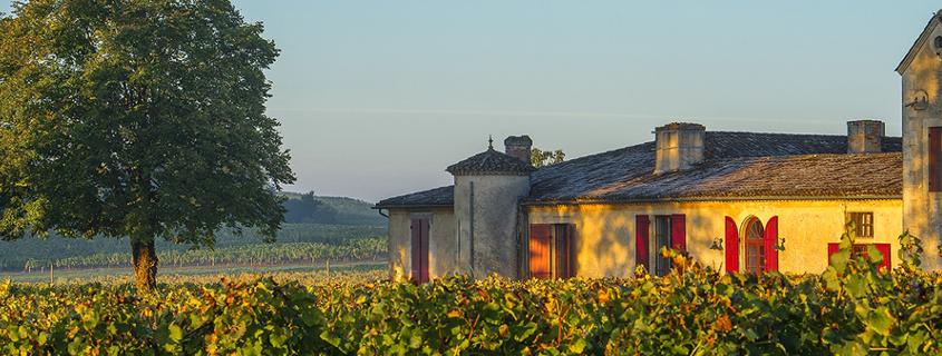 chateau sigalas rabaud sauternes, visite grand cru classé sauterne, visite domaines sauternes, visite domaines route des vins graves et sauternes, vignoble sauternes