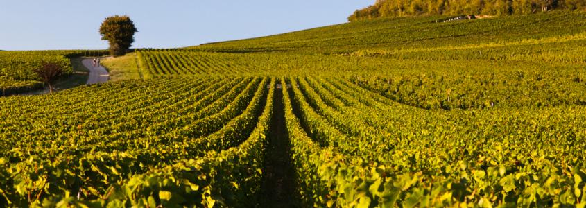 Vignoble en Côte Chalonnaise, route des vins en côte chalonnaise