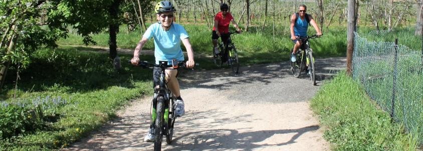 vélo vignes alsace, activité vélo alsace, visite vignoble vélo route des vins d'alsace, domaine pfaffenheim, dégustation vin pfaffenheim, domaine rieflé landmann