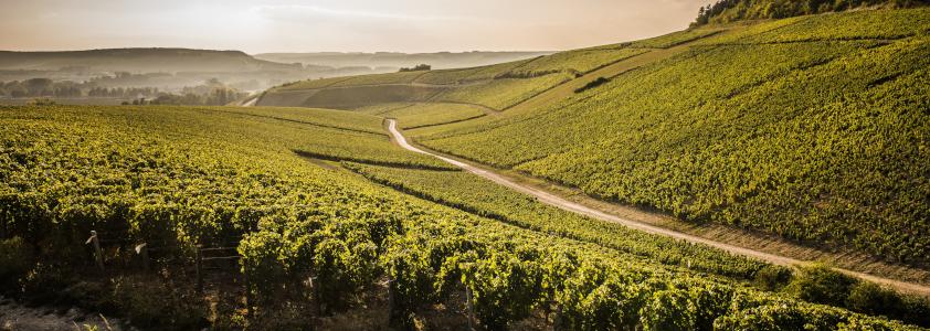 route des vins en chablis, route bourgogne chablis, circuit route des vins auxerre chablis
