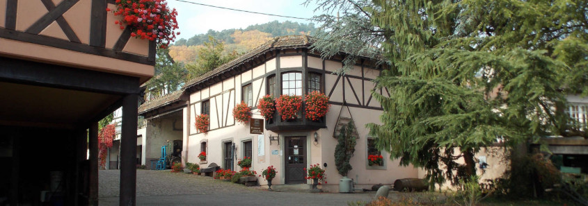 Domaine Kuentz Bas, visit winery alsace, free wine tasting alsace, wine tasting alsace