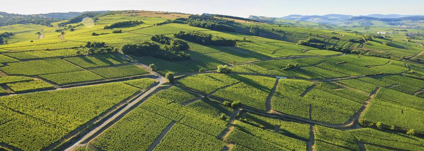 Route des vins de Bourgogne, faire la route des vins de bourgogne, conseils route des vins bourgogne, que faire sur la route des vins de bourgogne, climats bourgogne