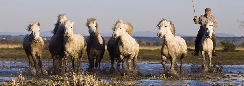Parc Naturel Régional de Camargue, camargue, camargue provence, chevaux de camargue, vacances camargue, week end camargue, séjour camargue, week end arles