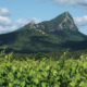 Route des vins du Languedoc, Route des vins de Montpellier, route des vins languedoc roussillon, route des vins pic saint loup, pic saint loup, pic saint loup montpellier