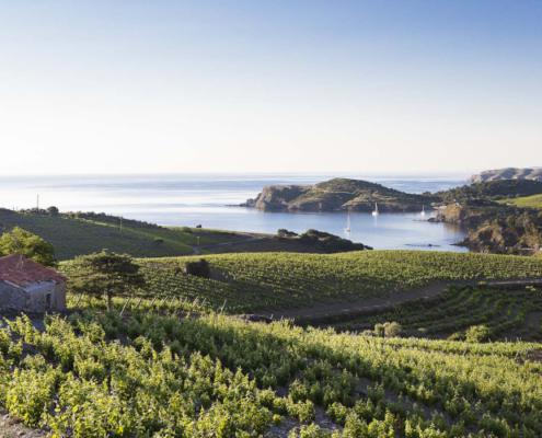 route des vins du roussillon, route des vins en roussillon, carte route des vins roussillon, vin roussillon, route des vins, banyuls, collioure, maury, rivesaltes, appellations sud, appellations roussillon, dégustations roussillon, visite domaines roussillon