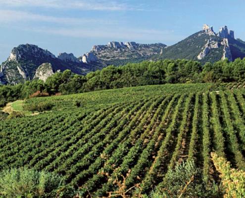 Route des vins de la vallée du Rhône, route vin rhone, route des vins en vallée du rhone, route des vins rhone septentrional meridional, visite route des vins rhone, dégustation route des vins rhone