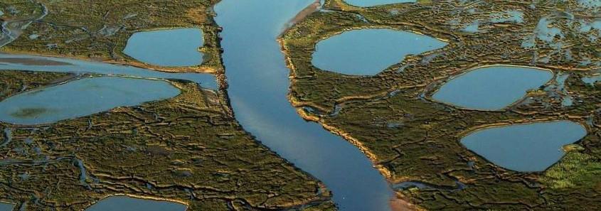 Reserve naturelle Pres Sales bassin arcachon