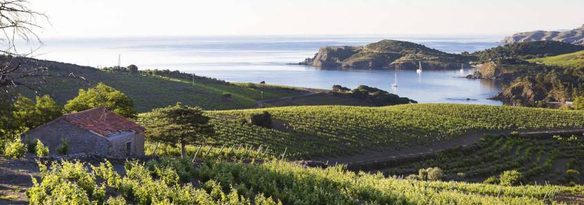 Les Clos de Paulilles Port-Vendres, Les Clos de Paulilles, Les Clos de Paulilles collioure, route des vins collioure, route des vins cerbères, route des vins roussillon, dégustation vin collioure, dégustation route des vin roussillon, visite domaine route des vins roussillon