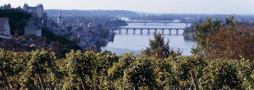 Route des vins de l'Anjou et du Saumurois, route vins anjou, route des vins angers, route des vins saumurois, route des vins saumur, saumur, angers, route des vins de loire, route des vins centre loire
