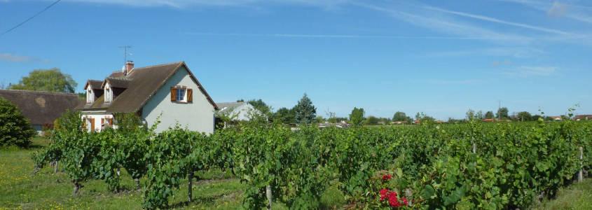 Domaine du Vardet, Domaine du Vardet Mont-près-Chambord, Visite domaine Blois, Dégustation vins blois