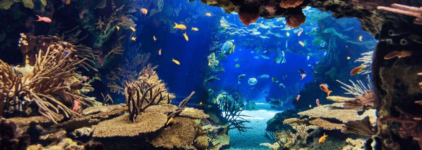 Aquarium d'Arachon, Arcachon aquarium