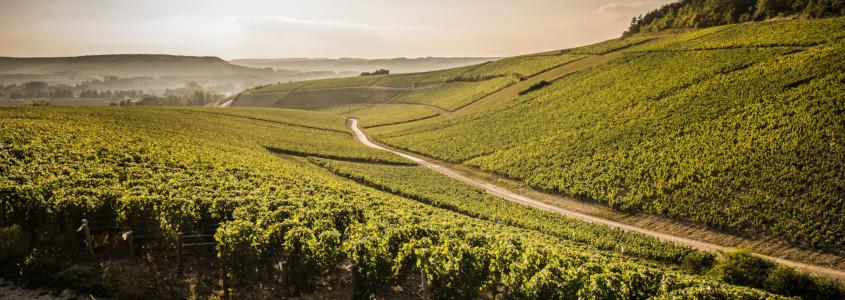 Climats de Bourgogne, tout savoir sur les vins de bourgogne, vins bourgogne histoire origine appellations cépages