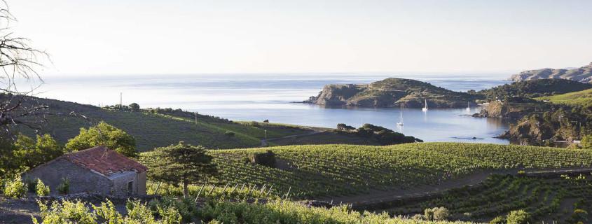 Guide des vins du Languedoc Roussillon