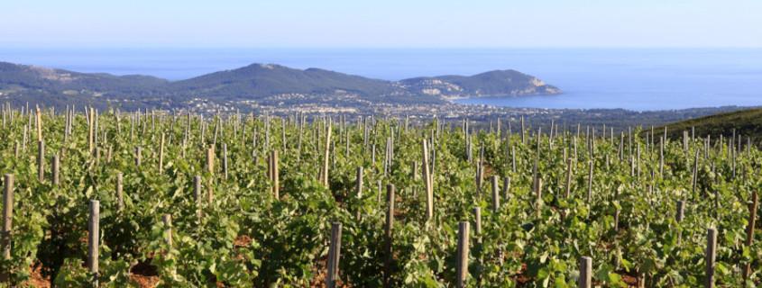 Guide des vins de Provence, vins provence