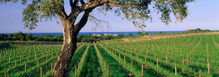 Terroir du Languedoc Roussillon
