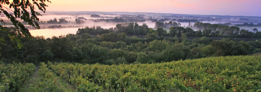 Terroir Vallée de la Loire