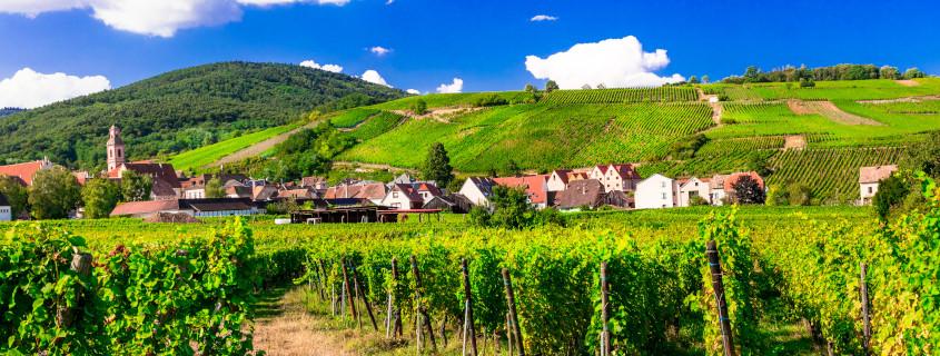 Vignoble Alsacien, vins d'Alsace