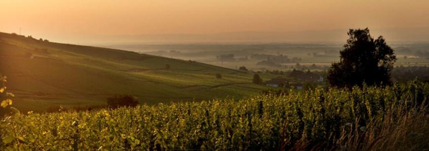 Visiter l'alsace, Alsace, Vignoble Alsace, Vignoble Kaysersberg, Kaysersberg, Visiter Kaysersberg, Route des vins d'Alsace
