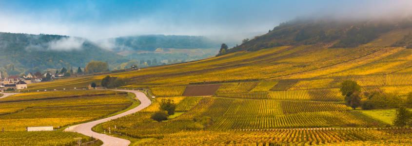 Route des Vins Dijon, Vignoble Bourgogne, Visite Bourgogne