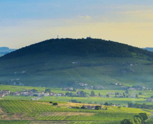 vignoble, beaujolais, vigne, vin, mont brouilly