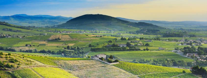 mont brouilly, randonnée, beaujolais, montagne, vin, marche, sport, paysage