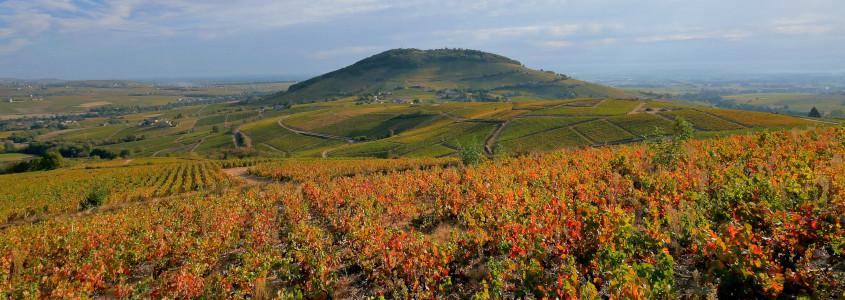 paysage vignoble beaujolais