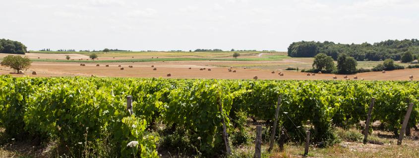 Vignoble Poitou-Charentes