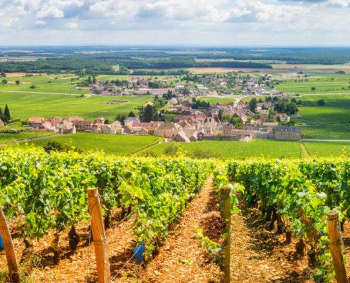 côte d'or, vignoble, vin, tourisme