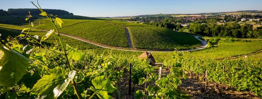 terroir du vignoble de Chablis