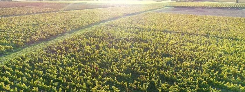 Rive Droite Bordeaux