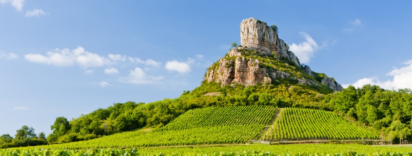 vignoble-vigne-maconnais-bourgogne