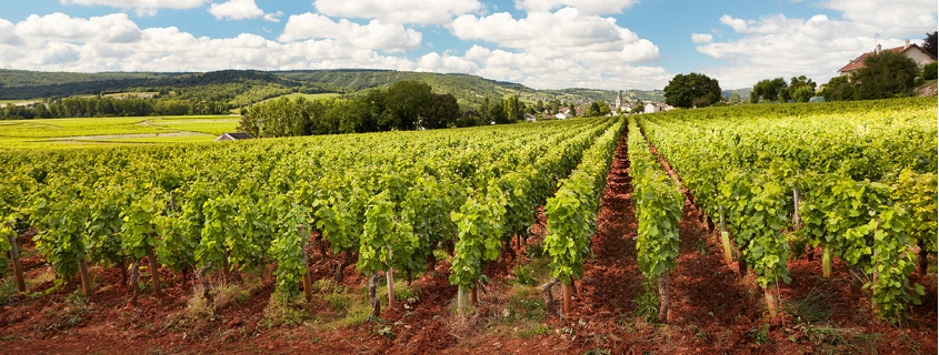 Vignoble Cote Chalonnaise Bourgogne