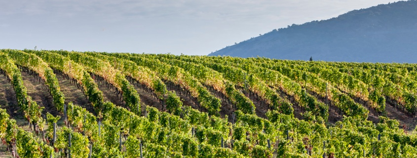 Vigne, vignoble, Vallée du Rhône Nord, Septentrional