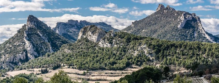 Vue sur vignoble, Vallée du Rhône Sud, vigne, montagne