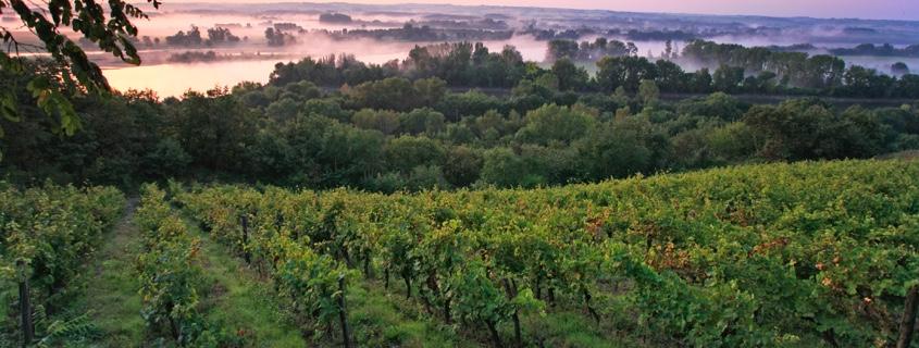 Vignoble Anjou Saumur Val de Loire