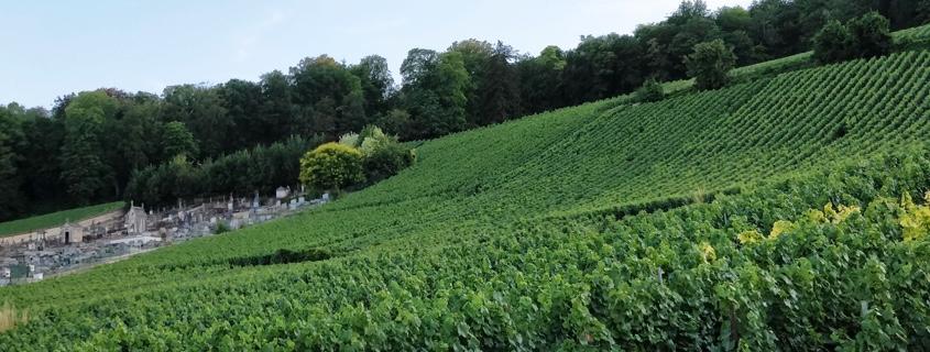 vignoble cote des blancs cote de sezanne champagne