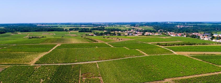 Vignoble Nantais Val de Loire