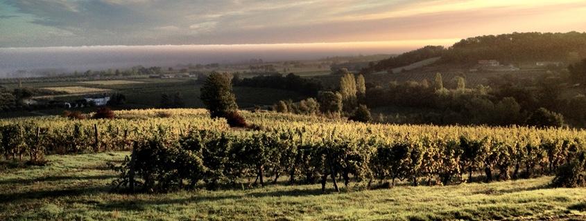 Vignoble du Bergeracois dans le Sud Ouest