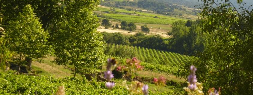 Paysage et vignoble du Languedoc