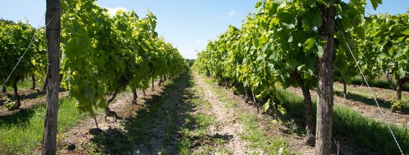 vignoble-moyenne-garonne-sud-ouest-blog