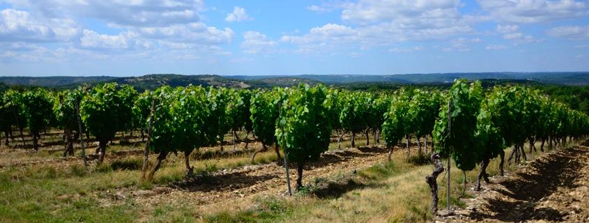 vignoble du Piémont Massif Central Sud Ouest