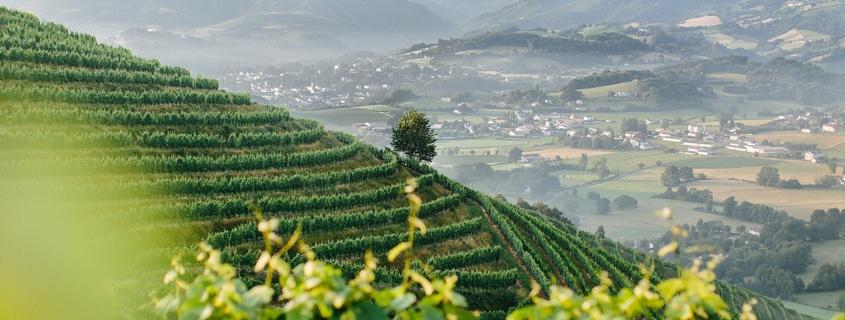 Vignoble du Piémont Pyrénéen Sud Ouest