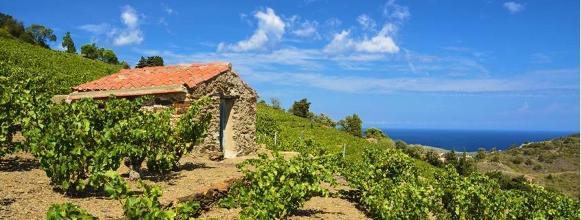 Vignoble du Roussillon